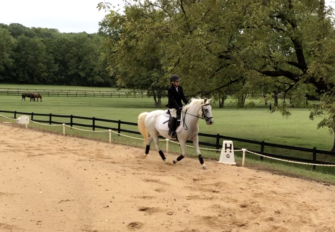 2020 Equestrian video competition winners announced